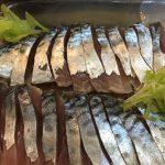 魚のプロとは? マサバとゴマサバ 出張寿司、回転寿司宅配寿司