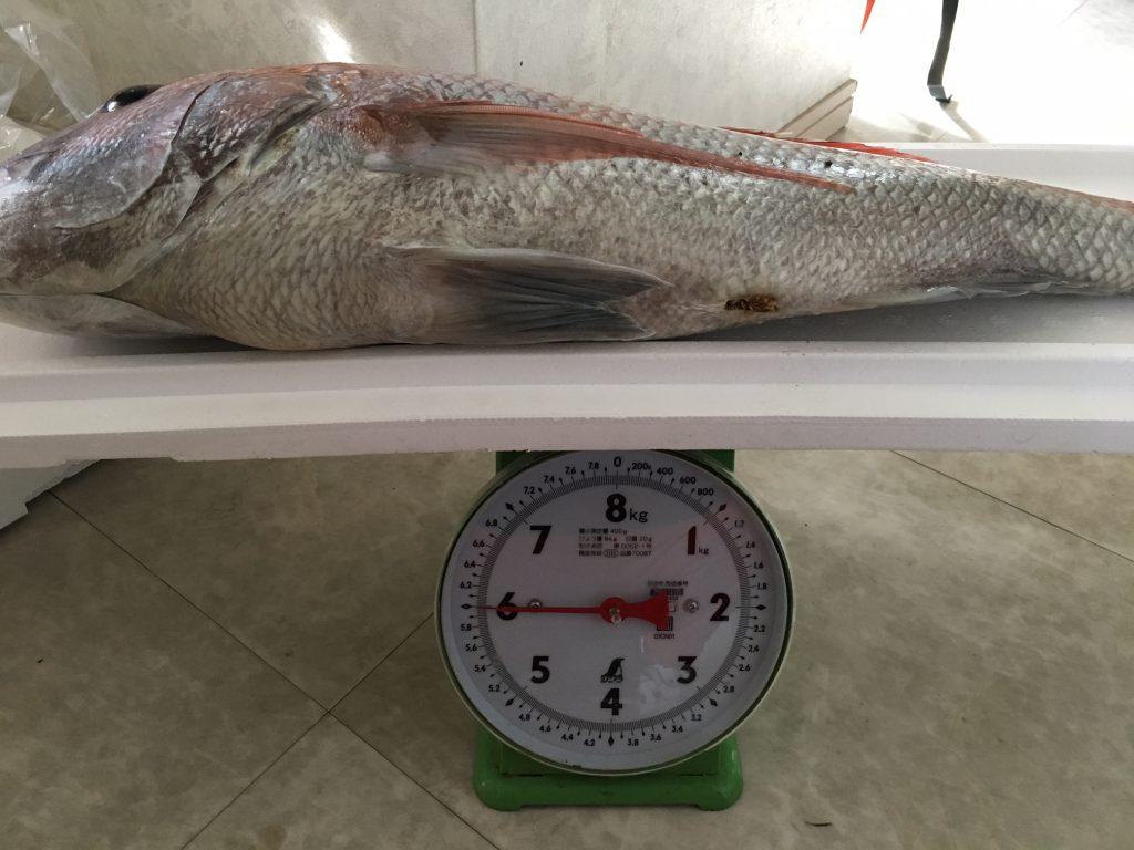 マダイ6kg