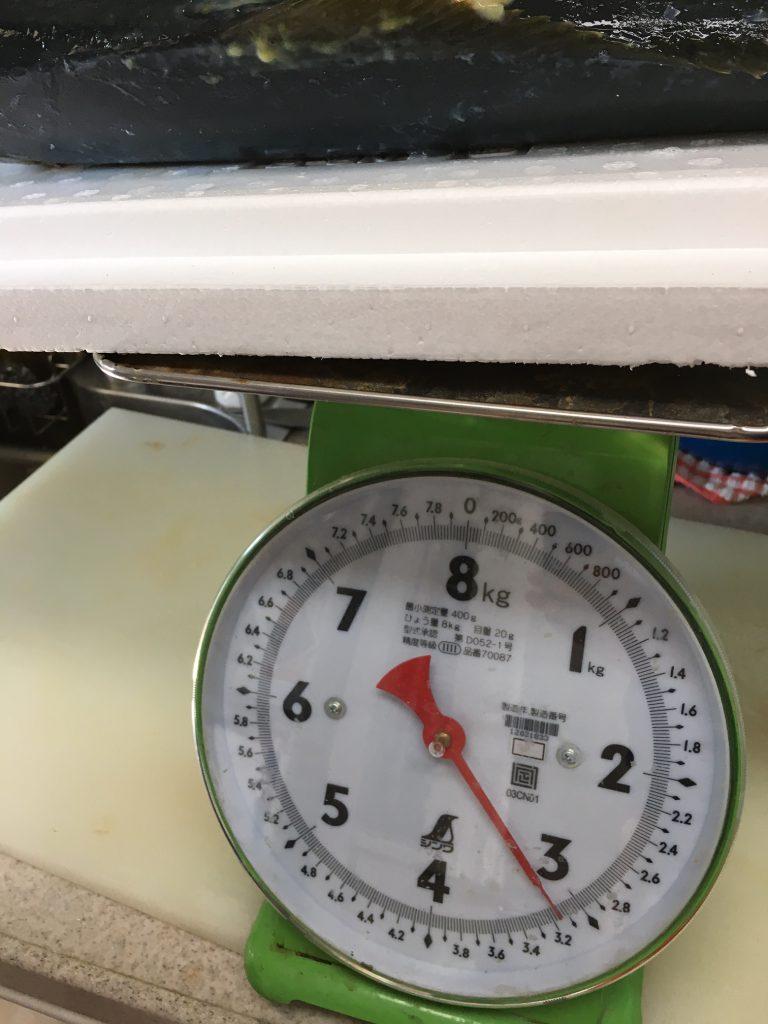 ヒラマサ3.2kg