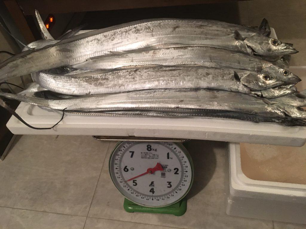 タチウオ5.4kg